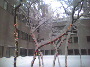Blizzard Photos: 77 Bleecker Street, the view of the courtyard.