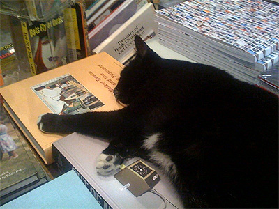 bookstore-cat.jpg